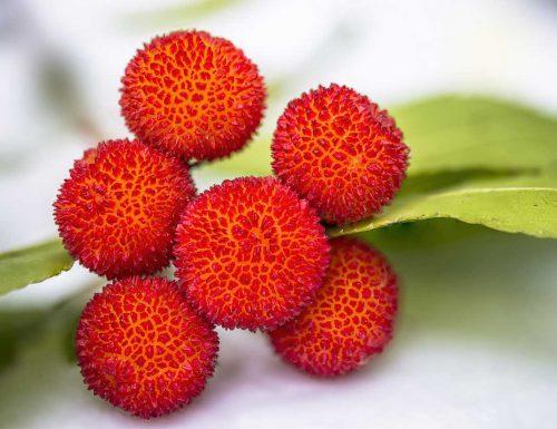 fruit9